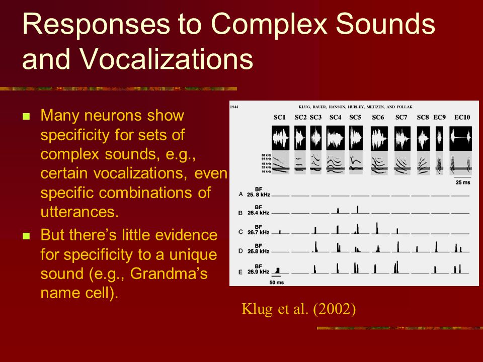 Responses to Complex Sounds and Vocalizations Many neurons show specificity for sets of complex sounds, e.g., certain vocalizations, even specific combinations of utterances.