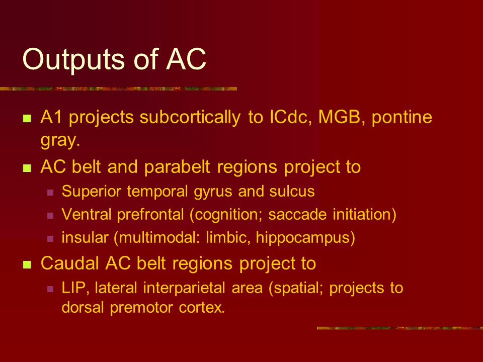 Outputs of AC A1 projects subcortically to ICdc, MGB, pontine gray.