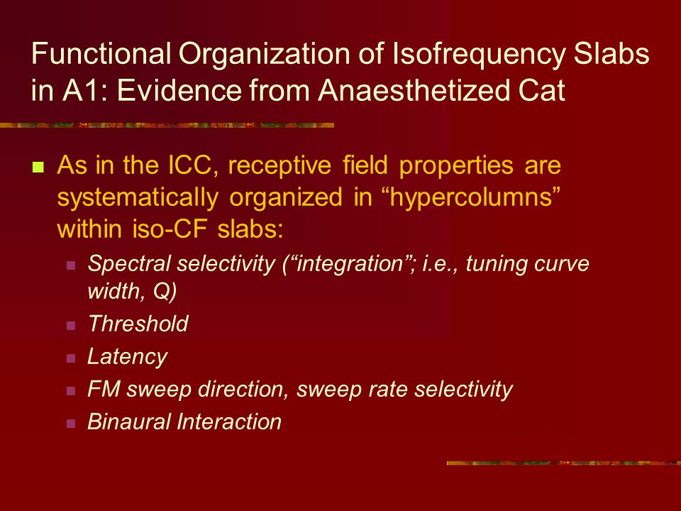 Functional Organization of Isofrequency Slabs in A1: Evidence from Anaesthetized Cat As in the ICC, receptive field properties are systematically organized in hypercolumns within iso-CF slabs: Spectral selectivity (integration; i.e., tuning curve width, Q) Threshold Latency FM sweep direction, sweep rate selectivity Binaural Interaction