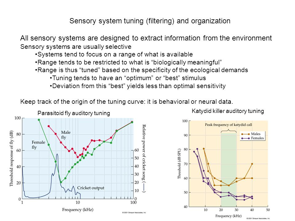 Sensory system tuning (filtering) and organization All sensory systems are designed to extract information from the environment Sensory systems are usually selective Systems tend to focus on a range of what is available Range tends to be restricted to what is biologically meaningful Range is thus tuned based on the specificity of the ecological demands Tuning tends to have an optimum or best stimulus Deviation from this best yields less than optimal sensitivity Keep track of the origin of the tuning curve: it is behavioral or neural data.
