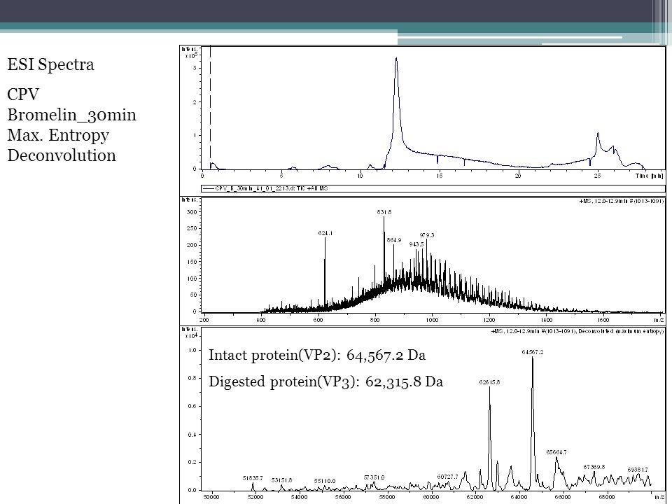ESI Spectra CPV Bromelin_30min Max.