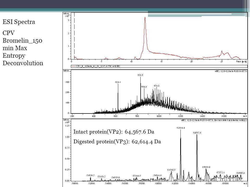 ESI Spectra CPV Bromelin_150 min Max Entropy Deconvolution Intact protein(VP2): 64,567.6 Da Digested protein(VP3): 62,614.4 Da