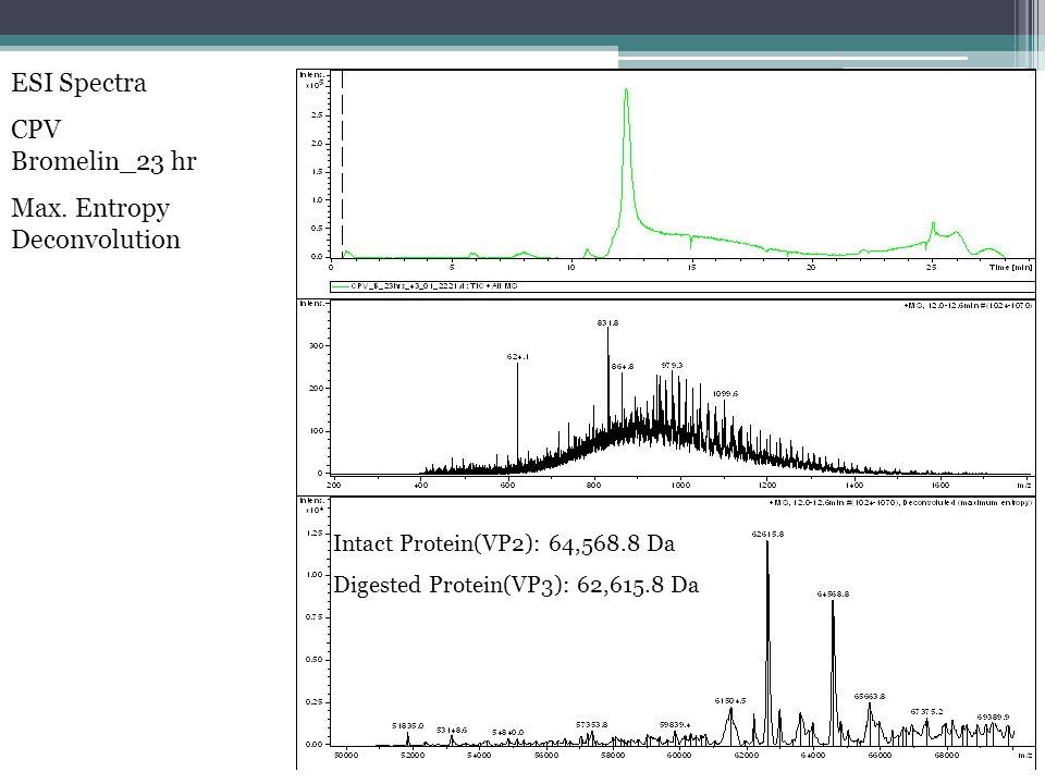 ESI Spectra CPV Bromelin_23 hr Max.
