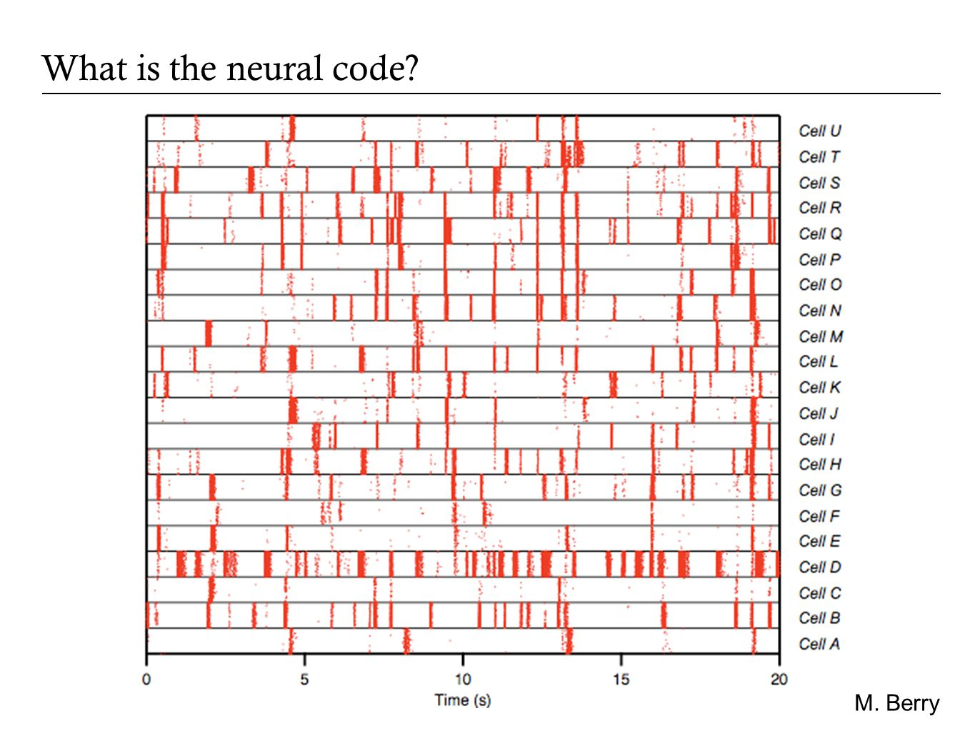 What is the neural code? Single neurons Populations
