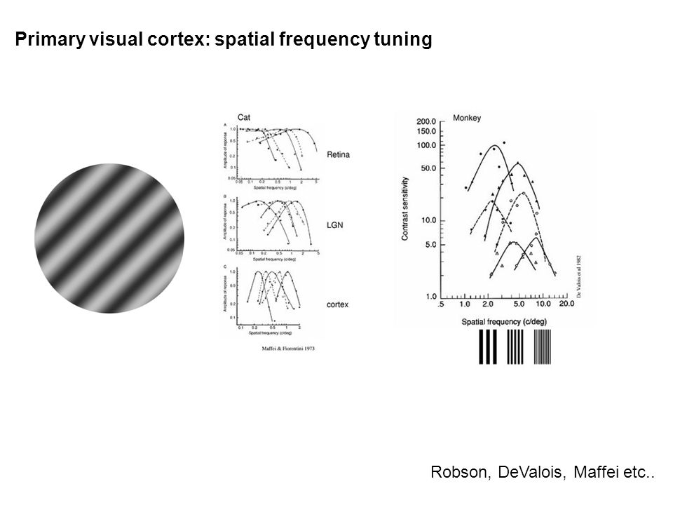 Primary visual cortex: spatial frequency tuning Robson, DeValois, Maffei etc..