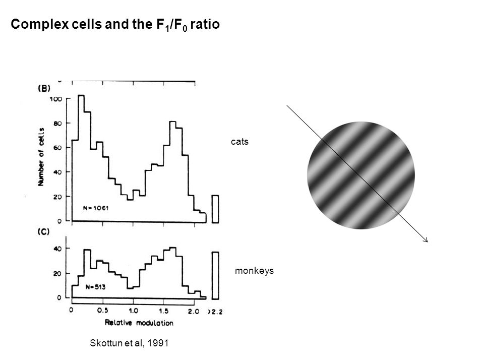 Complex cells and the F 1 /F 0 ratio cats monkeys Skottun et al, 1991