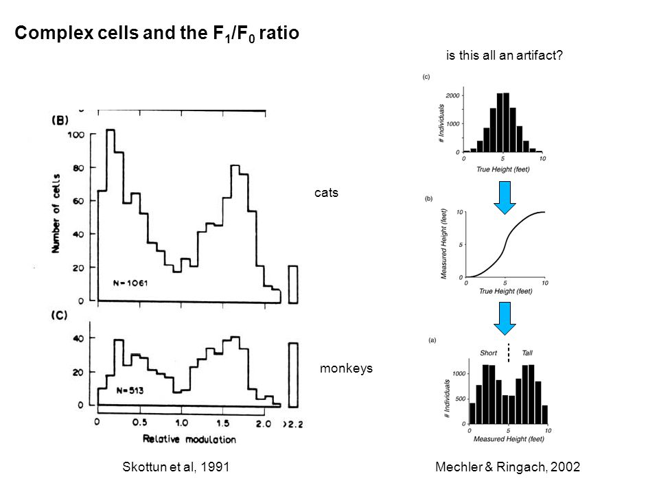 Complex cells and the F 1 /F 0 ratio Skottun et al, 1991 cats monkeys Mechler & Ringach, 2002 is this all an artifact?