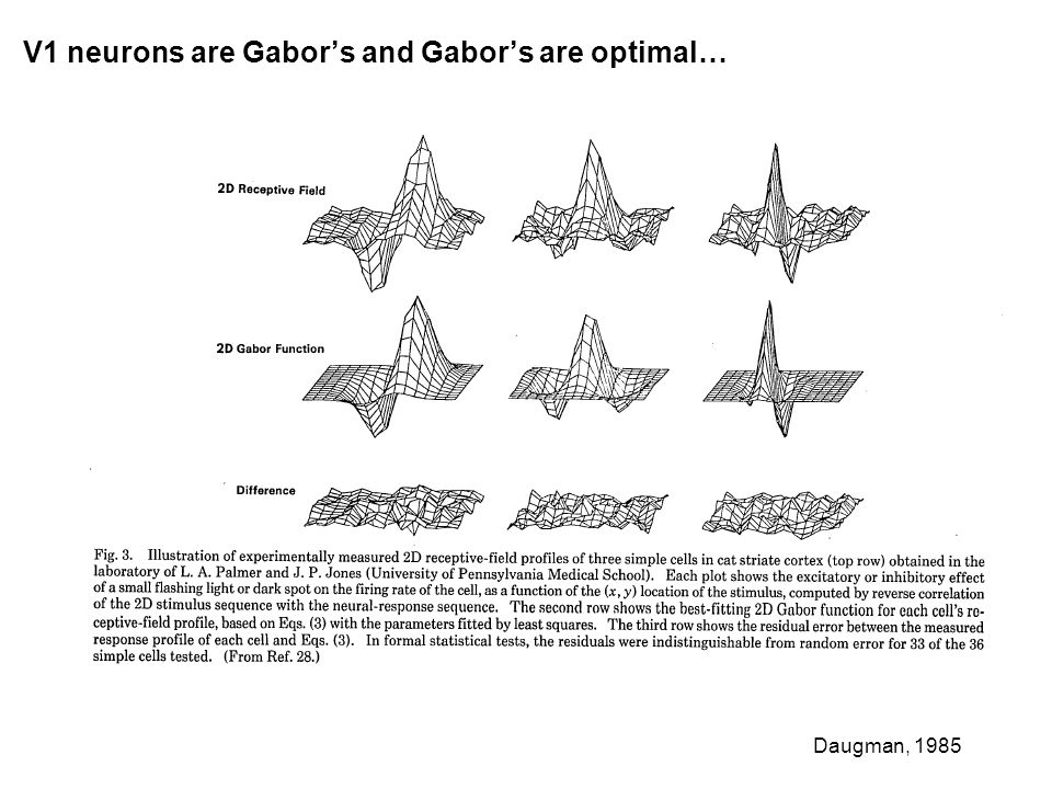 V1 neurons are Gabors and Gabors are optimal… Daugman, 1985