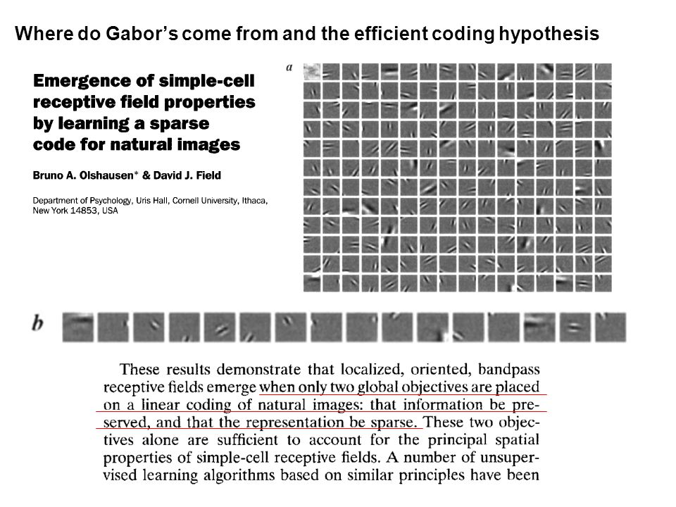 Where do Gabors come from and the efficient coding hypothesis