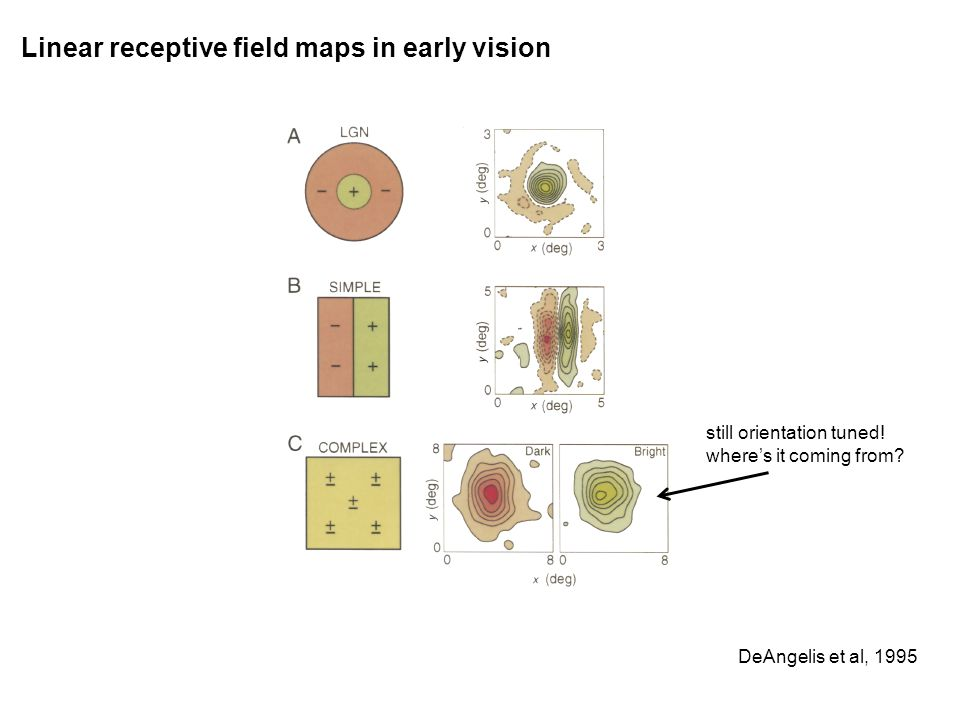 Linear receptive field maps in early vision DeAngelis et al, 1995 still orientation tuned.