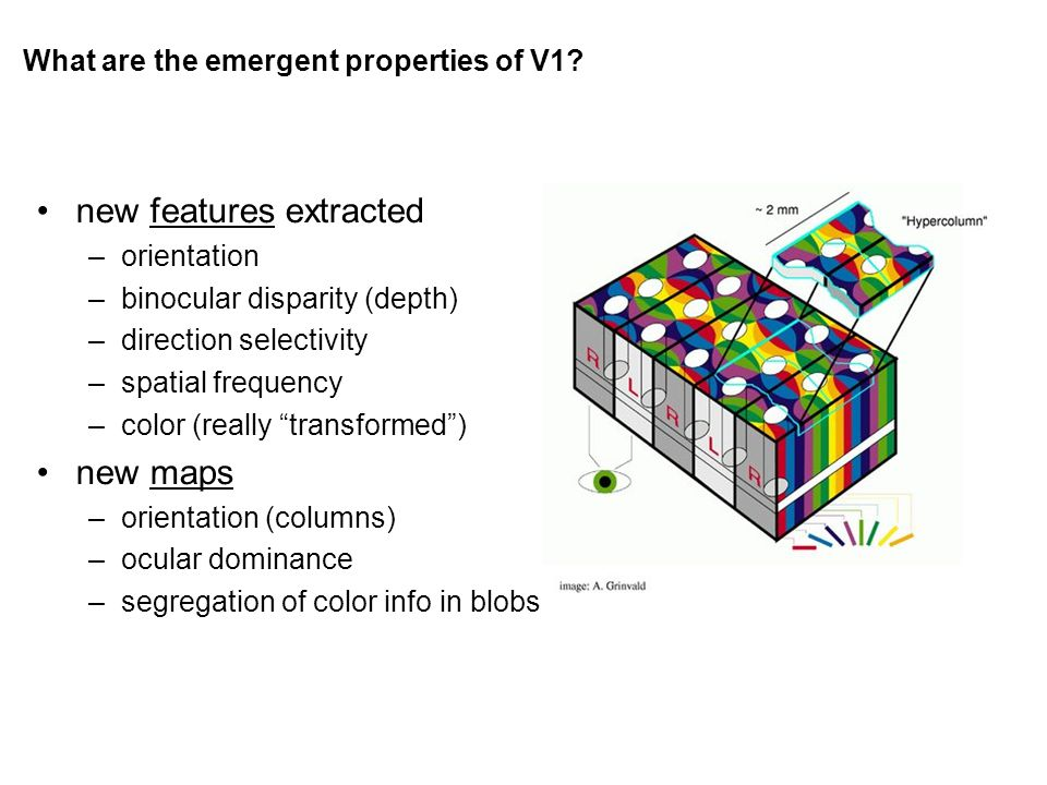 What are the emergent properties of V1.