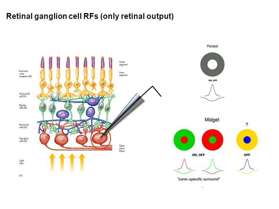 Retinal ganglion cell RFs (only retinal output)