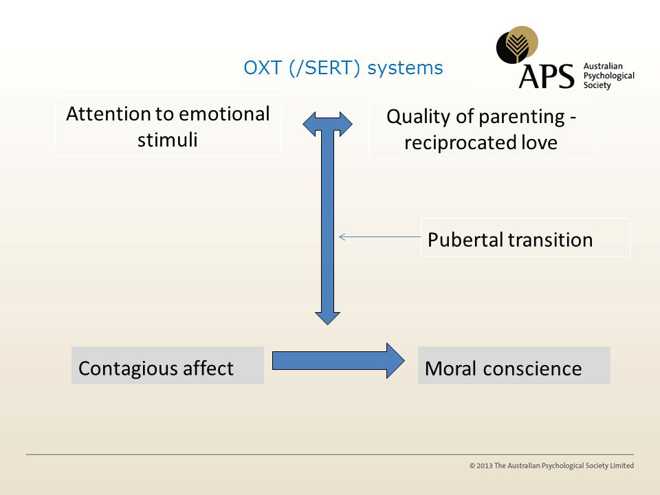 OXT (/SERT) systems Contagious affect Attention to emotional stimuli Pubertal transition Moral conscience Quality of parenting - reciprocated love