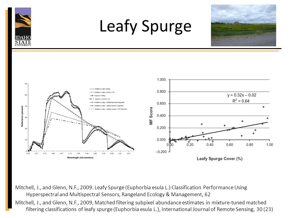 Leafy Spurge Presence / absence: – Producers accuracy: 59% / 75% – Overall accuracy: 62% HyMap TM simulation: – Dependent upon cover >0% to 90%: – Producers accuracy: 63-83% – Overall accuracy: 72–93 % Mitchell, J., and Glenn, N.F., 2009.