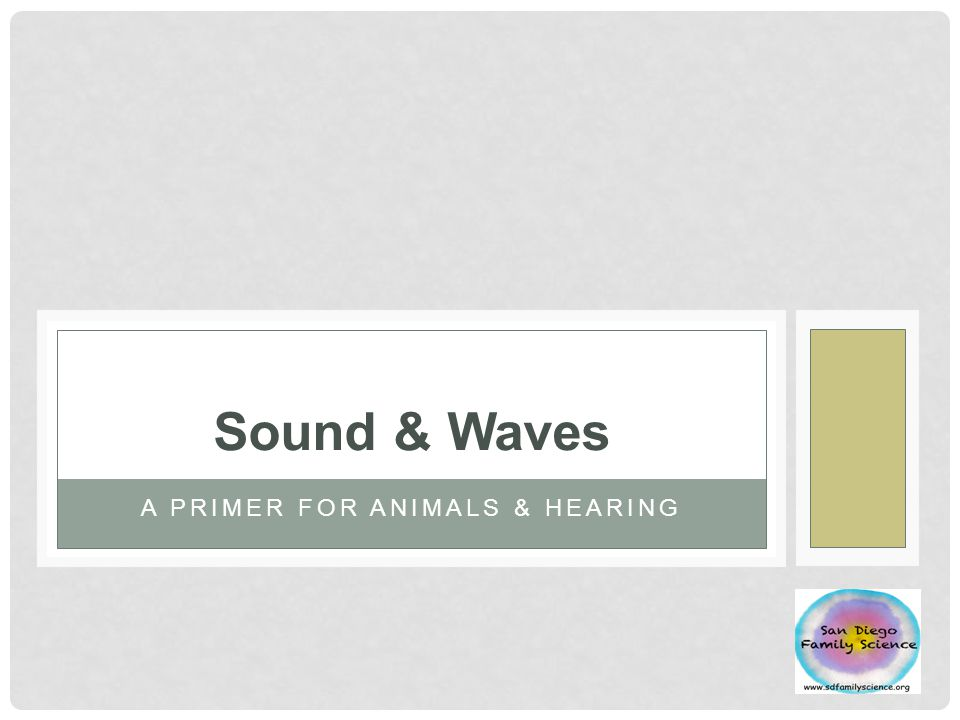 A PRIMER FOR ANIMALS & HEARING Sound & Waves