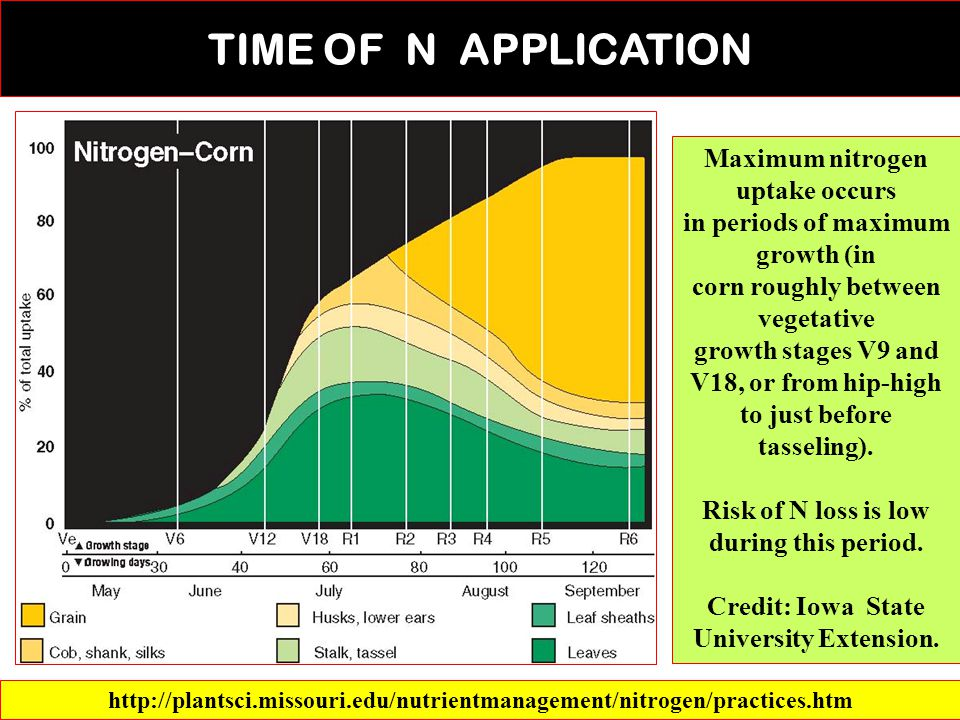 TIME OF N APPLICATION Maximum nitrogen uptake occurs in periods of maximum growth (in corn roughly between vegetative growth stages V9 and V18, or from hip-high to just before tasseling).
