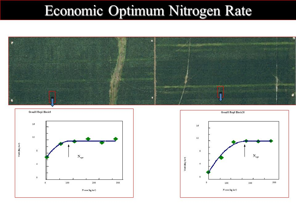 Oran00 Rep1 Block N rate (kg ha -1 ) Yield (Mg ha -1 ) N opt Oran00 Rep3 Block N rate (kg ha -1 ) Yield (Mg ha -1 ) N opt Economic Optimum Nitrogen Rate