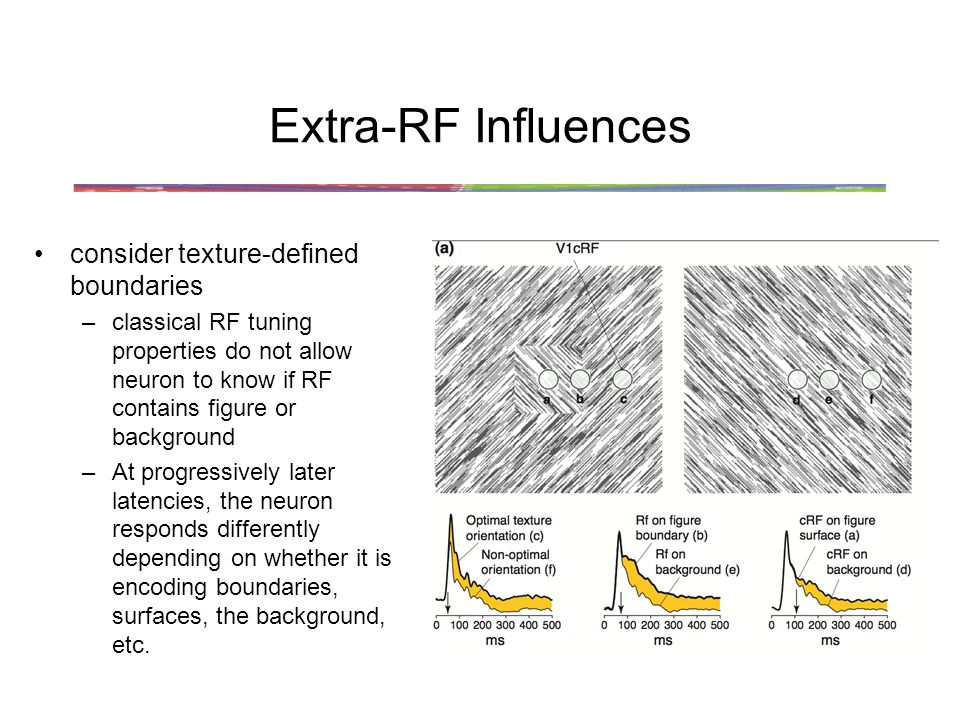Extra-RF Influences consider texture-defined boundaries –classical RF tuning properties do not allow neuron to know if RF contains figure or background –At progressively later latencies, the neuron responds differently depending on whether it is encoding boundaries, surfaces, the background, etc.