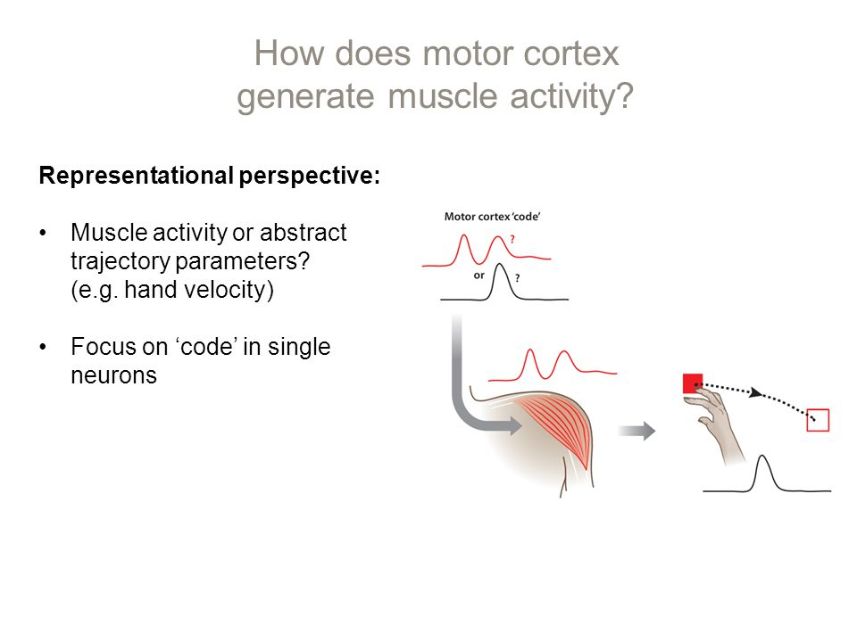 An epic, twenty-year battle was fought over the cortical representation of movement.