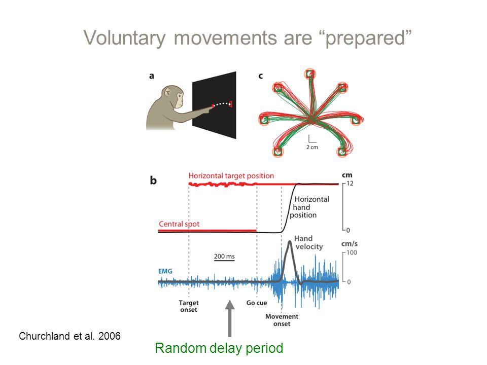 Voluntary movements are prepared Random delay period Churchland et al. 2006