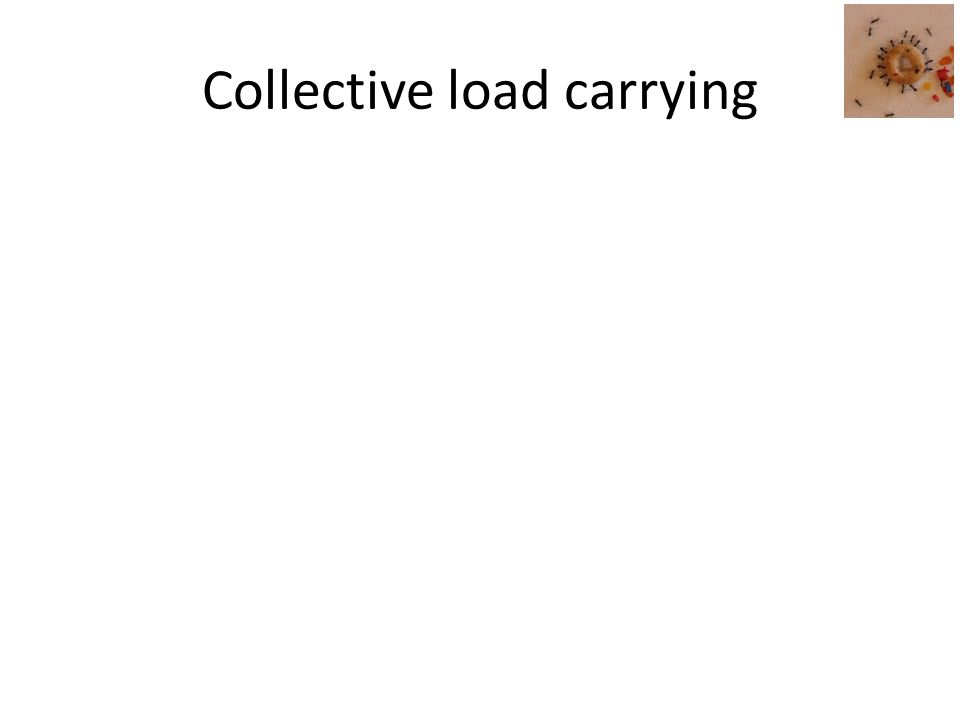 Collective load carrying