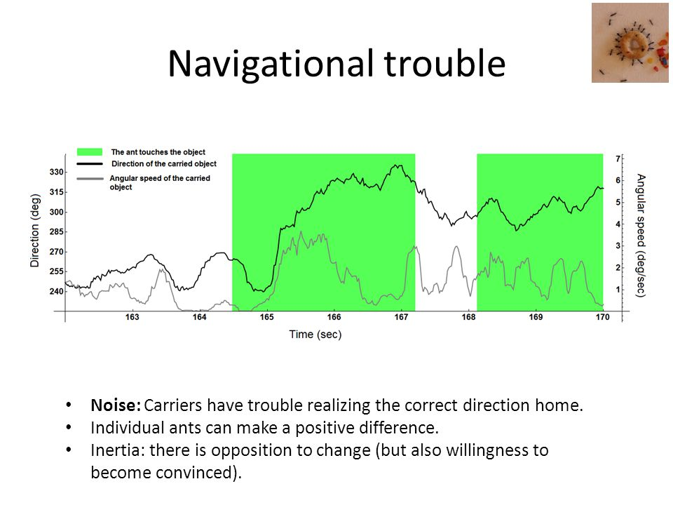 Navigational trouble Noise: Carriers have trouble realizing the correct direction home.