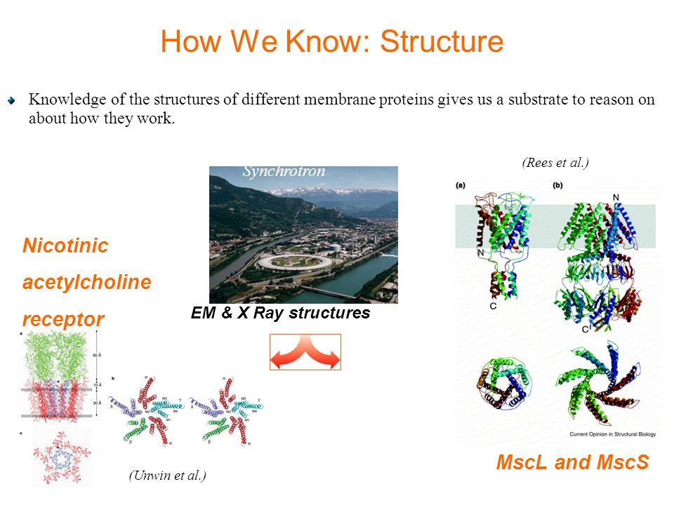 How We Know: Structure Knowledge of the structures of different membrane proteins gives us a substrate to reason on about how they work.