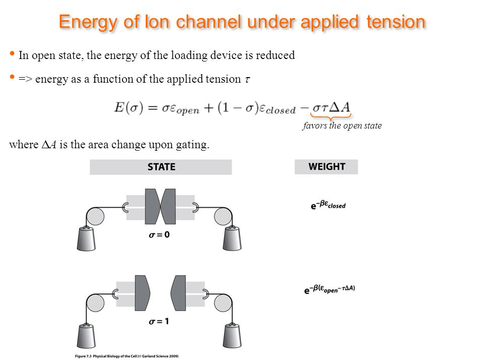 Energy of Ion channel under applied tension => energy as a function of the applied tension where A is the area change upon gating.