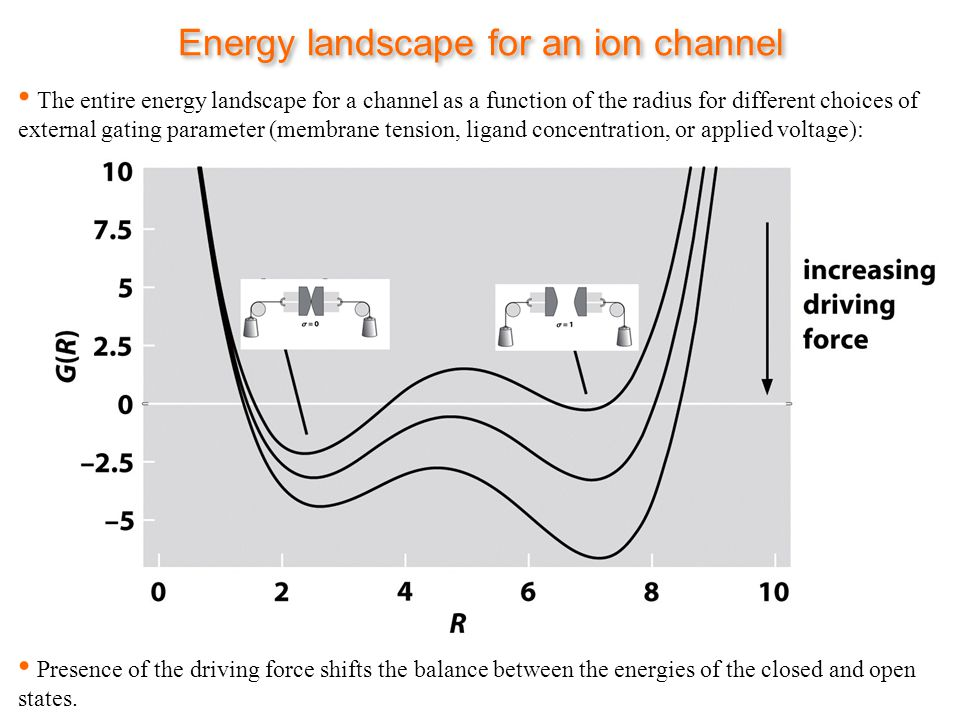 Energy landscape for an ion channel The entire energy landscape for a channel as a function of the radius for different choices of external gating parameter (membrane tension, ligand concentration, or applied voltage): Presence of the driving force shifts the balance between the energies of the closed and open states.