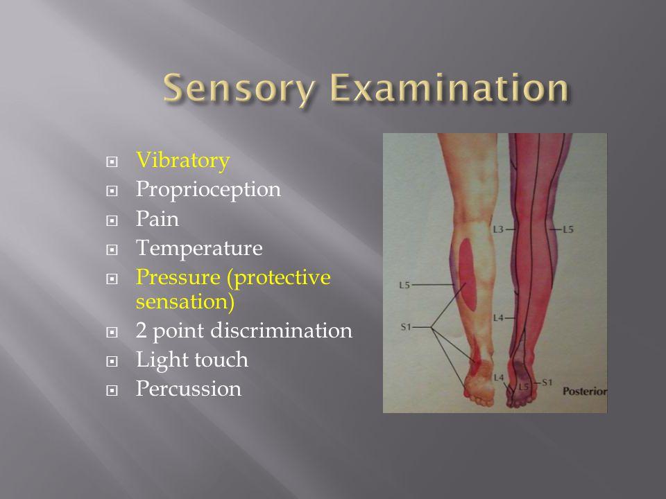 Vibratory Proprioception Pain Temperature Pressure (protective sensation) 2 point discrimination Light touch Percussion