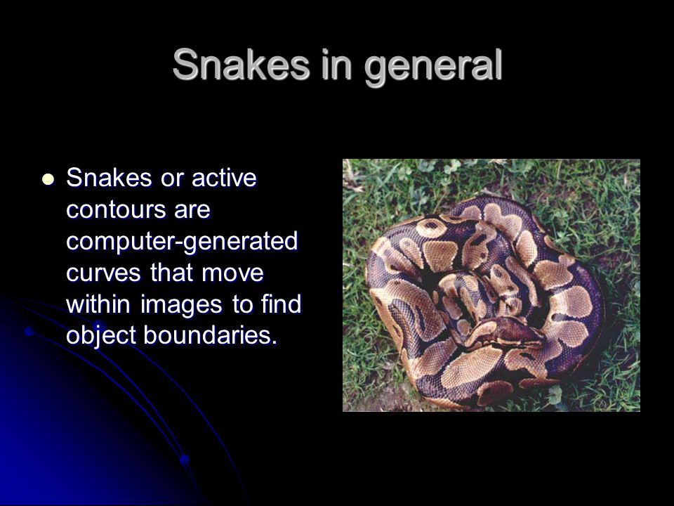 Snakes in general Snakes or active contours are computer-generated curves that move within images to find object boundaries.