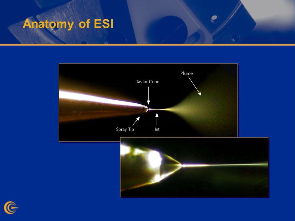 Anatomy of ESI