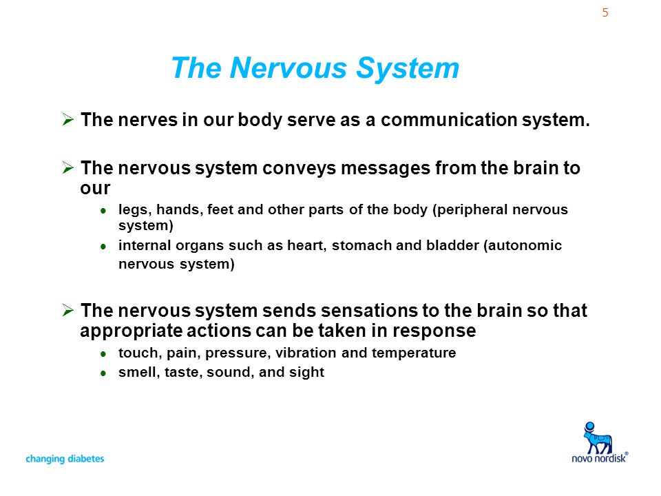 5 The Nervous System The nerves in our body serve as a communication system. The nervous system conveys messages from the brain to our l legs, hands,