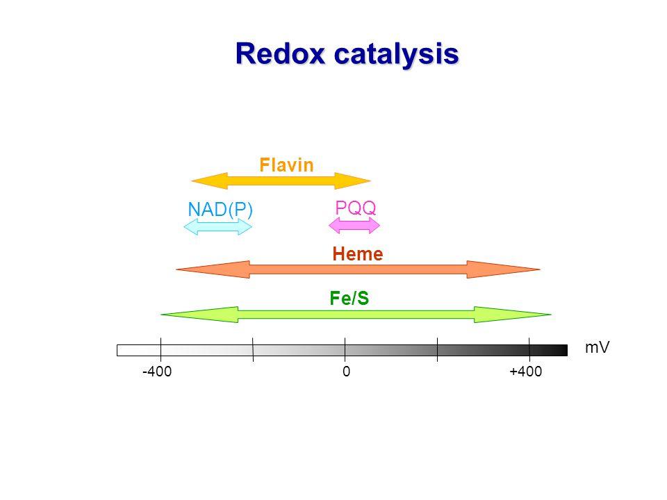 -4000 +400 mV Flavin NAD(P) Fe/S Heme Redox catalysis PQQ
