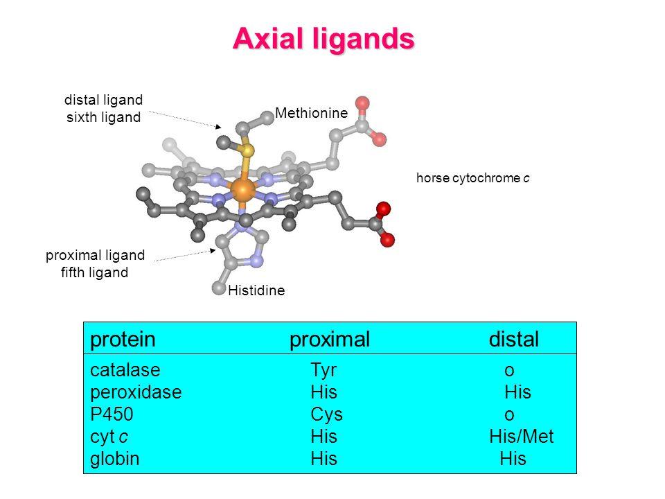 Axial ligands Methionine Histidine distal ligand sixth ligand proximal ligand fifth ligand horse cytochrome c proteinproximaldistal catalase Tyr o peroxidase His His P450 Cys o cyt c HisHis/Met globin His His