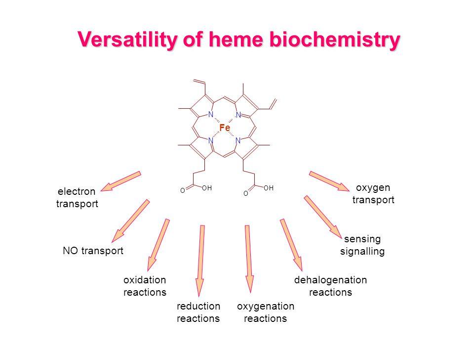 electron transport oxidation reactions reduction reactions oxygenation reactions Versatility of heme biochemistry oxygen transport dehalogenation reactions sensing signalling N OH O Fe N N N OH O NO transport