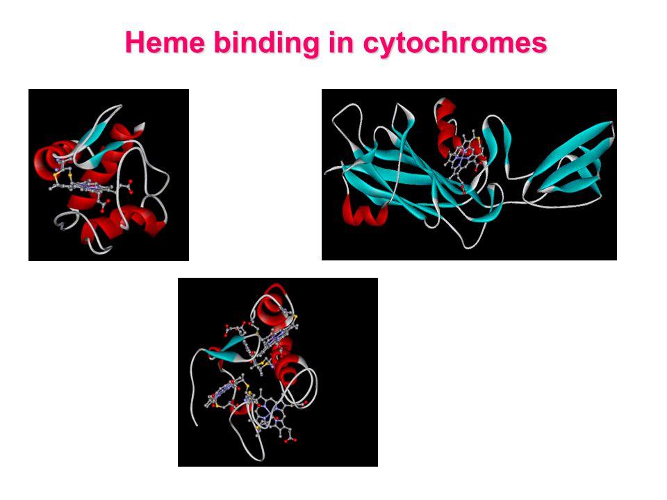 Heme binding in cytochromes