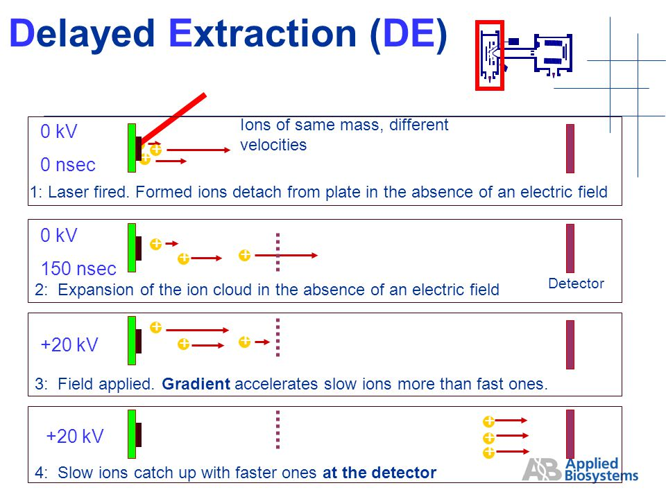 + Ions of same mass, different velocities + + Delayed Extraction (DE) 1: Laser fired.