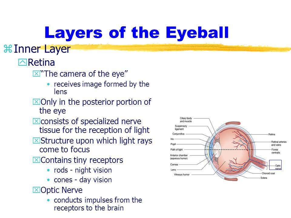 Humors of the Eyeball zAqueous Humor yWatery, transparent liquid that circulates through the anterior cavity of the eye.
