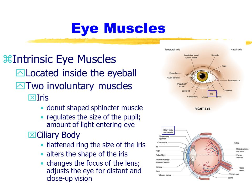 zOphtalmoscopy yPurpose xEvaluation of underlying structures of the eye xRoutine screening yProcedure xMydriatic drops are applied Dilates pupils xRoom is darkened xPt is asked to focus on stationary object xExaminer uses ophthalmoscope to view internal eye structure
