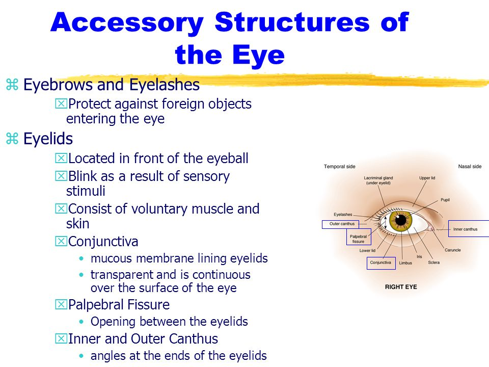 Refractory Errors zEtiology/Pathophysiology yAstigmatism -unequal curve in the shape of the cornea or lens
