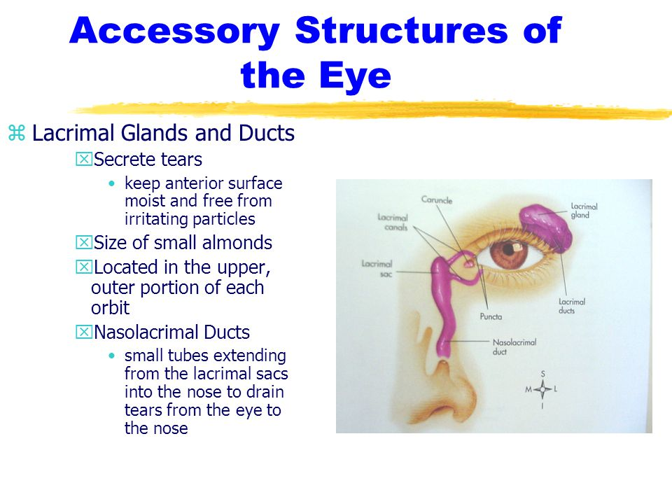 Cataracts zEtiology/Pathophysiology yNoninfectious opacity or clouding of the lens yCongenital yAcquired ySenile xassociated with older adults xmost common
