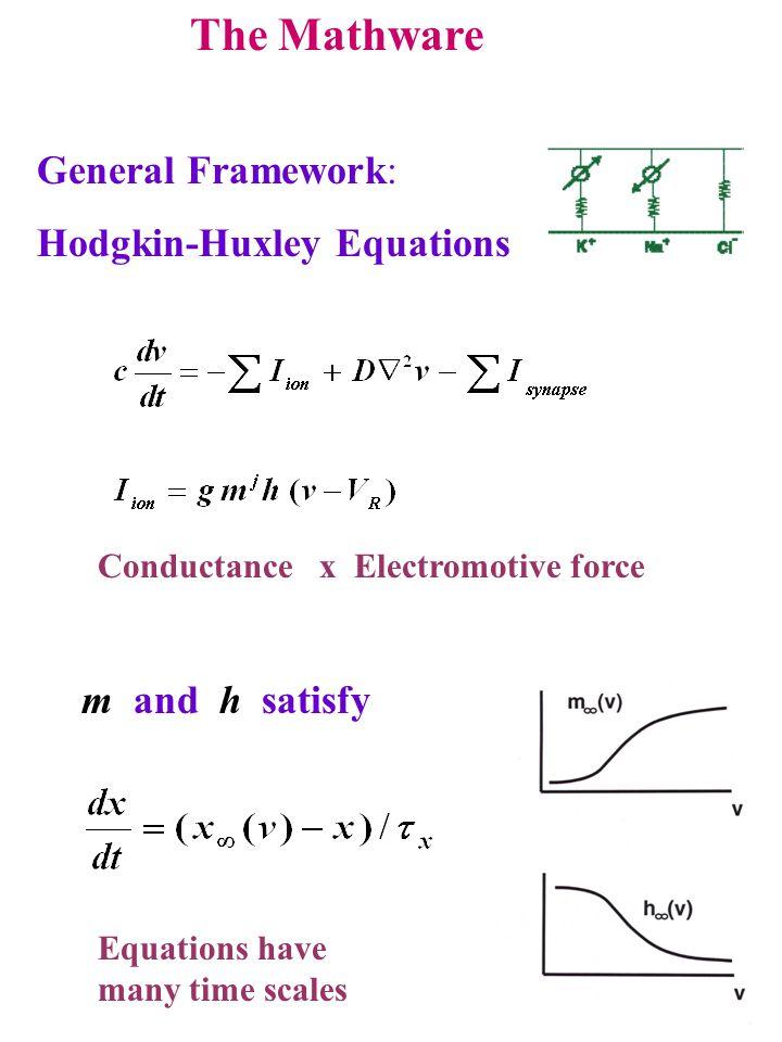 More Rhythms, More Math … Suggestion (von Stein): Gamma, beta are used for feedforward processing, alpha for feedback.
