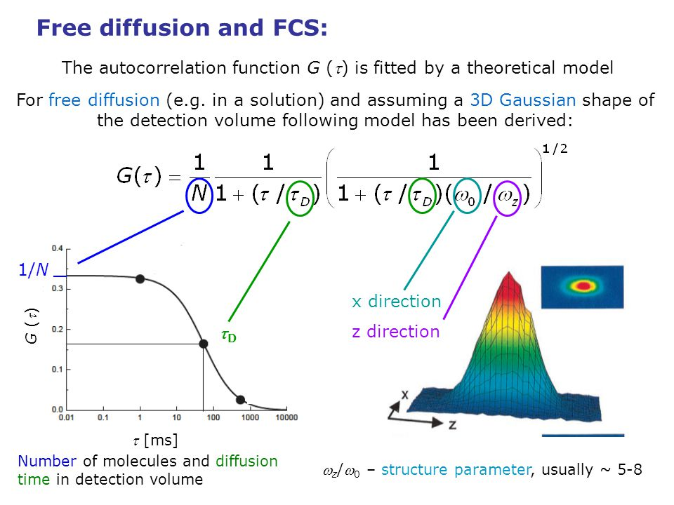 Free diffusion and FCS: The autocorrelation function G () is fitted by a theoretical model When considering the transition to triplet state: characteristic time of triplet transition fraction of molecules in triplet When considering more fluorophore species with different diffusion times: [ms] G () D2 D1 brightness fraction