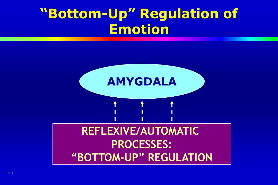 10 EI-I AMYGDALA REFLEXIVE/AUTOMATIC PROCESSES: BOTTOM-UP REGULATION Bottom-Up Regulation of Emotion