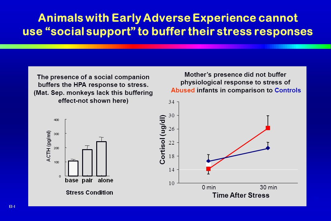 48 EI-I The presence of a social companion buffers the HPA response to stress. (Mat. Sep. monkeys lack this buffering effect-not shown here) 10 14 18