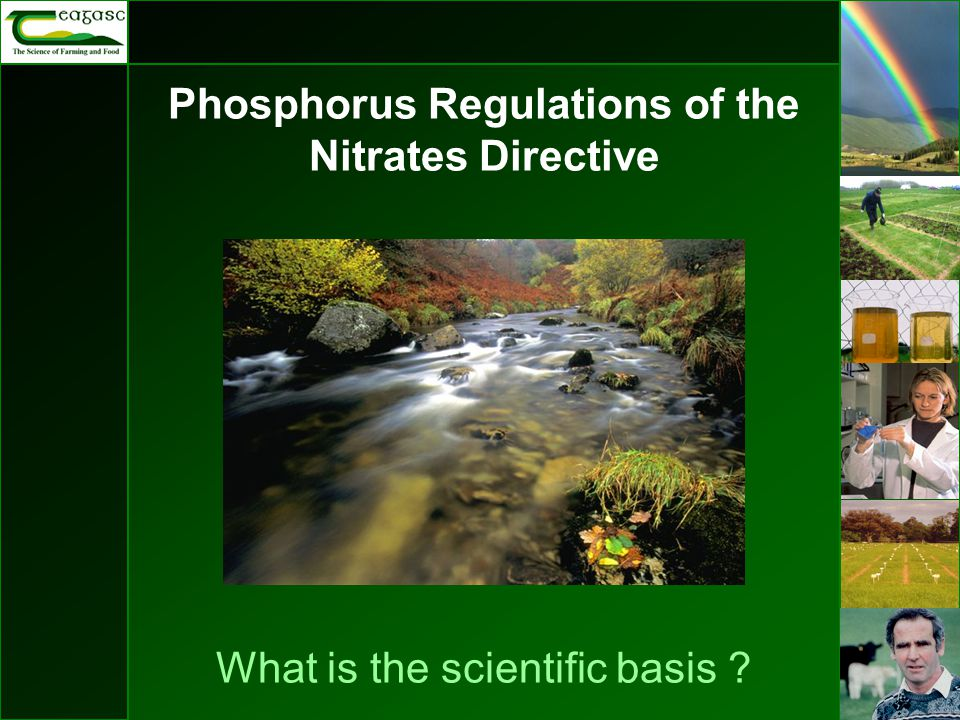 Phosphorus Regulations of the Nitrates Directive What is the scientific basis