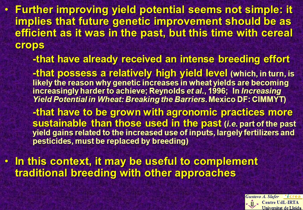 Further improving yield potential seems not simple: it implies that future genetic improvement should be as efficient as it was in the past, but this time with cereal cropsFurther improving yield potential seems not simple: it implies that future genetic improvement should be as efficient as it was in the past, but this time with cereal crops -that have already received an intense breeding effort -that possess a relatively high yield level (which, in turn, is likely the reason why genetic increases in wheat yields are becoming increasingly harder to achieve; Reynolds et al., 1996; In Increasing Yield Potential in Wheat: Breaking the Barriers.