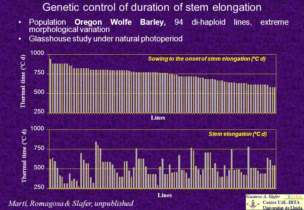 Genetic control of duration of stem elongation Population Oregon Wolfe Barley, 94 di-haploid lines, extreme morphological variation Glasshouse study under natural photoperiod Martí, Romagosa & Slafer, unpublished Gustavo A.