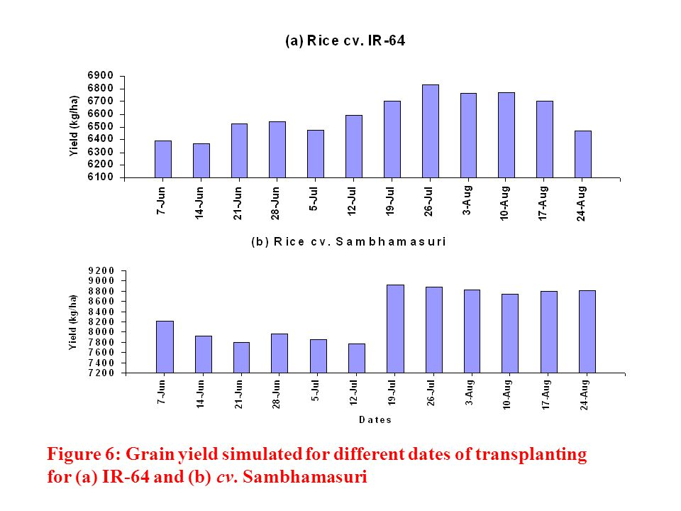 Figure 6: Grain yield simulated for different dates of transplanting for (a) IR-64 and (b) cv.